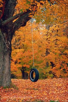 Swing among the leaves.