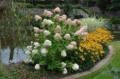 Pavel Chlouba: Jak řezat hortenzii latnatou? Plants, Gardening, Lawn And Garden, Plant, Planets, Horticulture