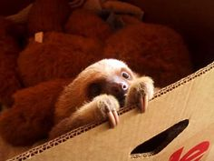this sloth is so cute