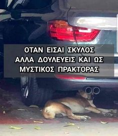 Animals And Pets, Funny Animals, Kai, Funny Greek, Stupid Funny Memes, Funny Shit, Greek Quotes, Funny Photos, Dog Lovers