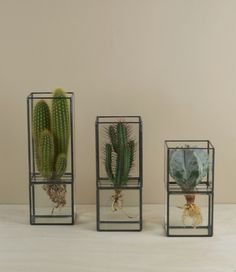 Terra hydroponic cases The simple stark lines of the lead-work lending their contents the illusion of floating in space within a cage and granting a rare opportunity to study the intricacies of root formations so often buried in dirt and sand. http://www.objectsofuse.com/products/house/terra-hydroponic-cases#.VGZaIvmsXwg