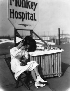 A nurse cares for a chimpanzee at the Luna Park monkey hospital in Lincoln Heights, California c. late 1920's