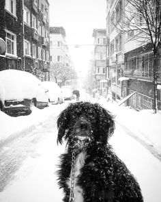 Kar soğukları başladı  günaydın  good morning #istanbul #sefayamak 2017. . . . #blackandwhitephoto #bnwphotography #bw #blackandwhitephotography #incredibleindiaofficial #streetphotography #vsco #vscocam #vsc #vscogood #vscogram #travel #vscodaily #beatiful  #beautifuldestinations #bestvacations #streetsgrammer #streetphotograhy #weekly_feature #streetmagazine #dog #dogs_of_instagram #dogs #dogsofinsta