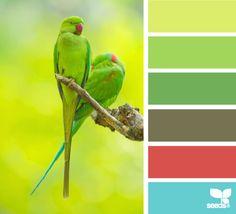 ***color love