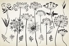 129627...Queen Anne's Lace,botanicals to decorate an art journal page!