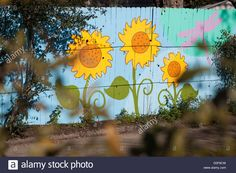 """Sunflower mural painted on a fence in Austin, Texas in what's known as """"Fairy Alley"""" Stock Photo"""