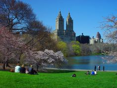 Have a croissant in Central Park
