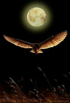 """rosiesdreams: """"Hunting by the light of the moon . By © Ken Allan Dronsfield """" Moon Pictures, Pretty Pictures, Beautiful Moon, Beautiful Birds, Nature Landscape, Luna Moon, Shoot The Moon, Moon Shadow, Moon Photography"""