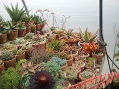 succulents (not for sale) Snug Harbor Farm