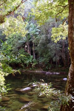 Mossman Gorge QLD 4873, Australia