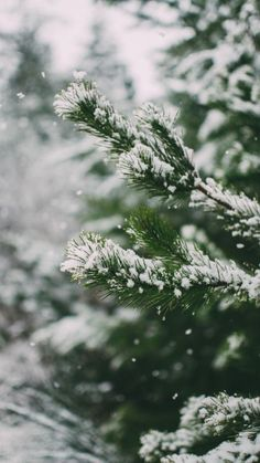 48 Christmas & Winter Phone Wallpapers