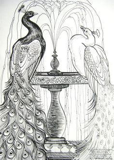 X Pen and Ink Drawing on Smooth Strathmore Bristol of two Peacocks getting refreshed in a fountain. Blue and White Peacocks Peacock Drawing, Peacock Art, Peacock Colors, Peacock Feathers, Peacock Coloring Pages, Coloring Book Pages, Line Drawing, Painting & Drawing, White Peacock
