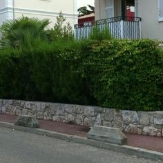 Il mio giardino visto dalla strada....