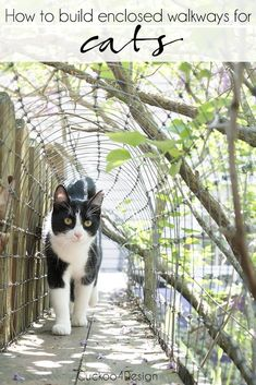 Our New Outdoor Cat Tunnel How to build outdoor tunnels for your cats to keep them safe outdoors Diy Cat Enclosure, Outdoor Cat Enclosure, Outdoor Cat Tunnel, Outdoor Cats, Cat House Outdoor, Hotel Gato, Cat Walkway, Pan Comido, Cat Safe Plants