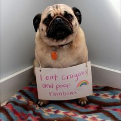 dog shaming at it's best - Imgur