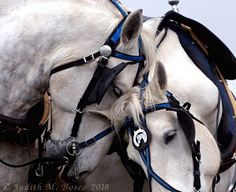 It has always amazed me how willing and forgiving horses are until they met up with a heavy handed uncaring handler. They give all that they have to us and more and we take it for granted, we use them up mindlessly just like the resources of our planet. Denice Garrou