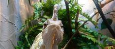 Maanantaikappale Insects, Fish, Animals, Animales, Animaux, Animal Memes, Animal, Animais, Dieren