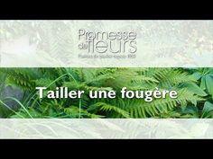 Promesse de Fleurs - YouTube Lupins, Comment Planter, Coin, Herbs, Gardens, Fern Plant, Plants, Garden Landscaping, Tips