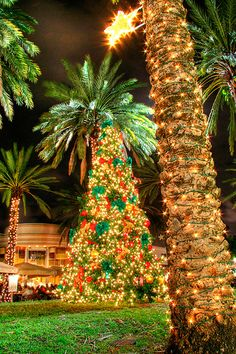 Christmas (Palm) Tree | Flickr - Photo Sharing!