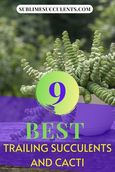 Here are the best trailing succulents and cacti to add on your collection. Find it all on this pin! Flowering Succulents, Cacti And Succulents, Planting Succulents, Cactus Plants, Cacti Garden, Air Plants, Succulent Planter Diy, Succulent Care, Succulent Species