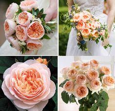 David Austin Juliet rose    Google Image Result for http://www.brides.com/blogs/aisle-say/juliet-david-austin-roses.jpg