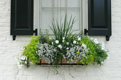 What Flowers And Plants Grow Well In Window Boxes?