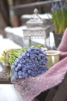 Vakre perleblomster eller muscari bringer våren inn i huset. http://www.mestergronn.no/blogg/