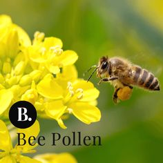 Bee Pollen, known as one of nature's perfect foods, widely used throughout history for its antioxidant, nutritional, and health-sustaining properties.  Bee pollen may also help support the immune system's ability to manage seasonal conditions. #antiaging #superfoods #supplements #essentialnutrition