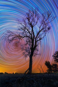 The talented photographer who captured this amazing photo of star trails is Australian photographer Lincoln Harrison. Pop Art Bilder, Ecole Art, To Infinity And Beyond, Cool Paintings, Light Painting, Art Plastique, Teaching Art, Elementary Art, Tree Art