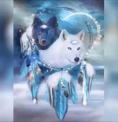 Native American Astrology, Native American Wolf, Native American Pictures, American Indian Art, Foto Fantasy, Fantasy Wolf, Gifs, Wolf Background, Pet Wolf