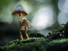 Prepare to have your world turned upside down. Many people think of mushrooms as over-developed mould, ugly growths found in dank conditions. In reality this could not be further from the truth. As beautiful and varied as their leafy friends, mushrooms and other fungi can be found the world over in an unending range of […]