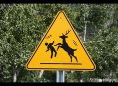 Warning: ROCKY BALBOA DEER AHEAD
