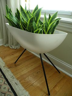 Modern indoor planter full of Mother-in-Law's Tongue ( I love the name of that plant!) // Great Gardens & Ideas //