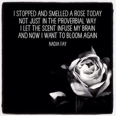 Sometimes you just need to go for a walk :) #nadiafay #nadiafayphotos #rose #bloom #poetry #inspiration #nature #scent #perfume #love #picoftheday #meme #instameme #instadaily #bestoftheday #photooftheday #flower #poem