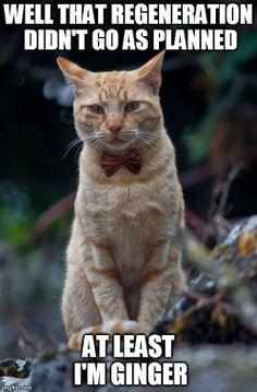 dr who cat @Odette Graskie