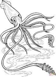 Image result for colossal squid drawing