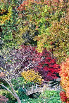 'Japanese Gardens in November,' Fort Worth, Texas | Dean Fikar (dfikar), on Flickr.