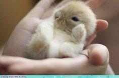 tiny bunny waving tiny goodbyes