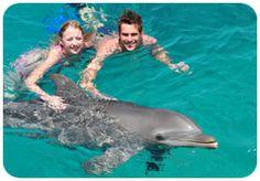 Dolphin Swim @ Curacao's Dolphin Academy