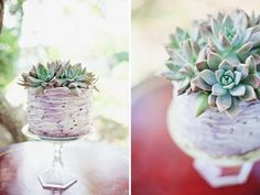 #Naked #Wedding #Cake with #Succulents