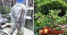 Tento nápad som odkukal od suseda a funguje výborne: Ak chcete ovocné stromčeky úplne zadarmo, vyskúšajte to aj vy!