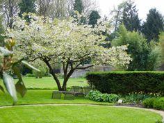 Dedemsvaart, Yellow garden at spring