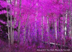 Purple Aspen 8x10 metallic print by MemoriesByTessa on Etsy, $30.00  Coupon code HOLIDAY to receive 25% off now through 1-31-2013