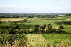 Ilja Gort's wijngaard in de Bordeaux, dat onderverdeeld is in 30 percelen waar verschillende soorten druiven groeien.