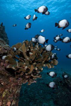 Fish around coral by Scott Portelli on 500px
