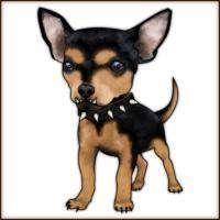 Killer Chihuahua.    Be afraid.  Be VERY afraid... ;)