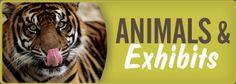 El zoológico de San Antonio es muy divertido. Este zoológico tiene muchos animales interesantes. Hay pájaros, reptiles, y maníferos. Tiene un tren del zoológico y un habitación de mariposas. Tiene su aniversario de 100 años este año.