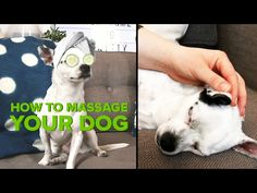 Learn These Massage Tips. Massage Tips, Good Massage, How To Massage Yourself, Massage Business, Dog Boutique, Bedtime Stories, Stress And Anxiety, Dog Training, Pup