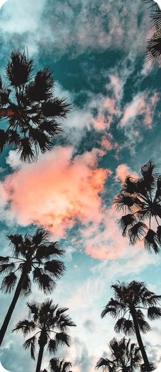 52 Ideas Travel Wallpaper Iphone Quotes Palm Trees For 2019 Tumblr Wallpaper, Wallpaper Sky, Tumblr Backgrounds, Travel Wallpaper, Screen Wallpaper, Nature Wallpaper, Wallpaper Backgrounds, Iphone Wallpapers, Trendy Wallpaper