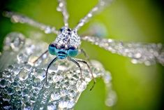 Photographer David Chambon presents a series of striking macro shots of insects, made ?at dawn, before they shake off the dew that covered their bodies in the room. Beautiful Insects With Dew Drops Photos) Photo Macro, Insect Photography, Levitation Photography, Exposure Photography, Winter Photography, Beach Photography, Amazing Photography, Abstract Photography, Photography Ideas